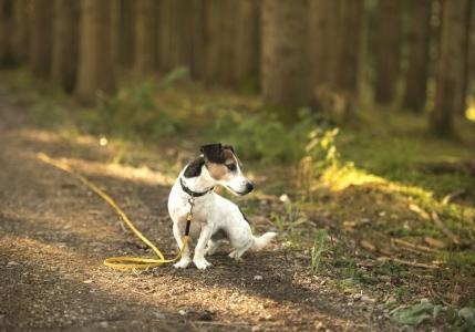 Der Hund ist entlaufen – was tun?
