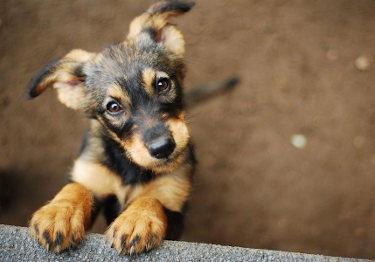 Tiere adoptieren