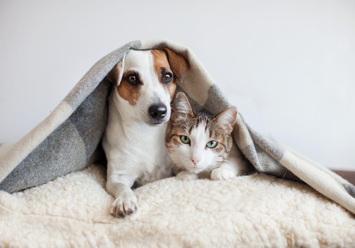 Tierheim Leipzig Hund Katze